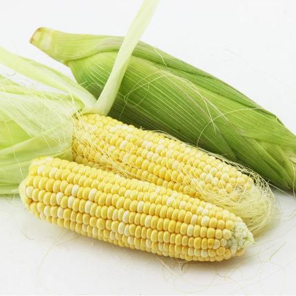 云南特产新鲜水果玉米2250g