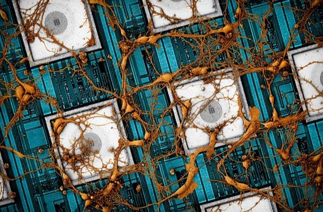 """三星与哈佛大学发表论文:拟用存储芯片""""下载""""人类大脑"""